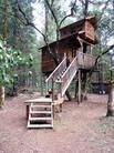Амазонская гостиница на деревьях.