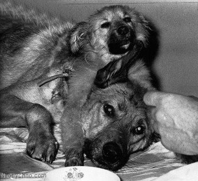 Два несчастных пса в одном