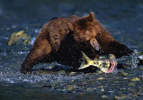 Фотографии дикой природы от david maitland