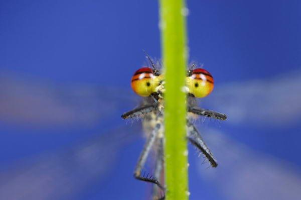Невероятно красивые фотографии дикой природы