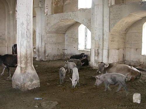 домашний скот в мечети