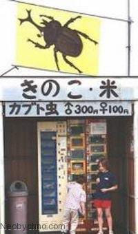 Автомат по продаже жуков
