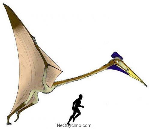 Гатцегоптерикс в сравнении с человеком