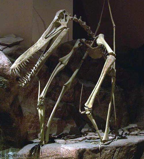 скелет гатцегоптерикса