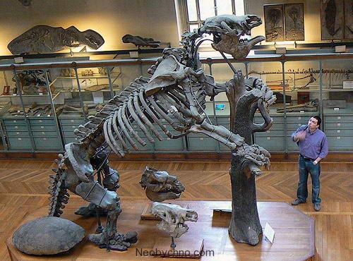 скелет Мегатерии