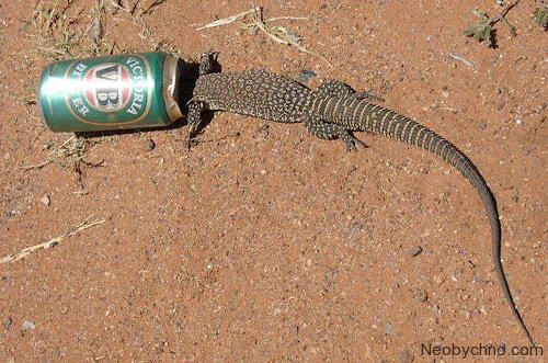 lizard_and_beer-01