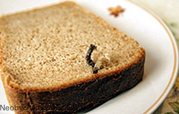 nail-in-the-bread-01