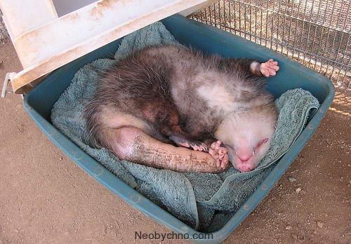 построить суммарную засыпает при опасности животное которых
