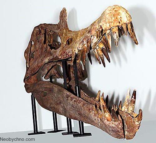 череп Сухомимуса с огромными зубами