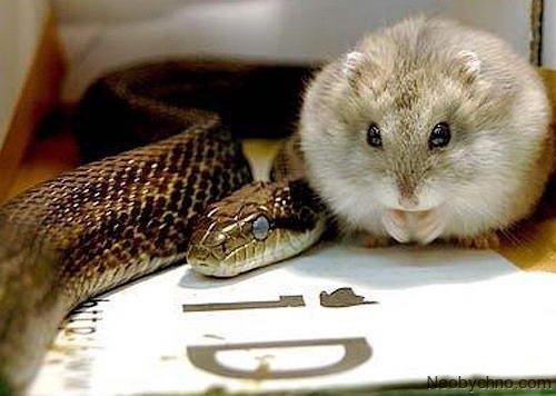 змея и хомяк