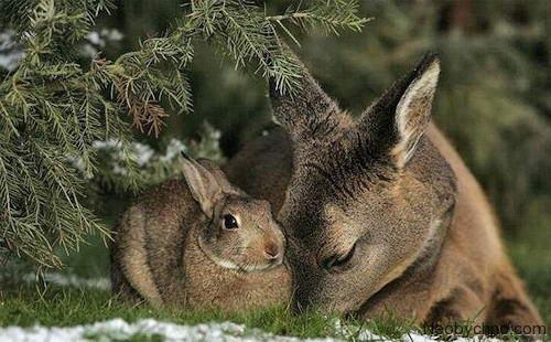 кролик и олень