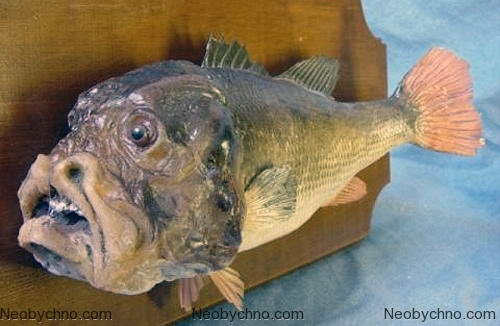 Рыба с человеческим лицом