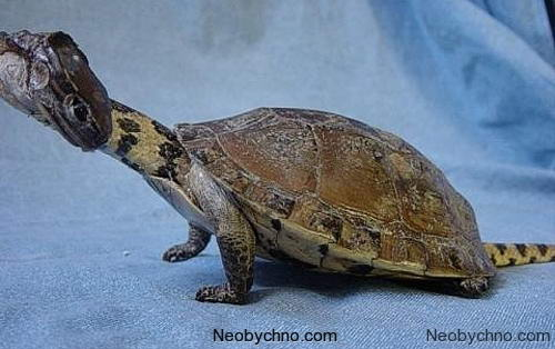 Черепаховая змея