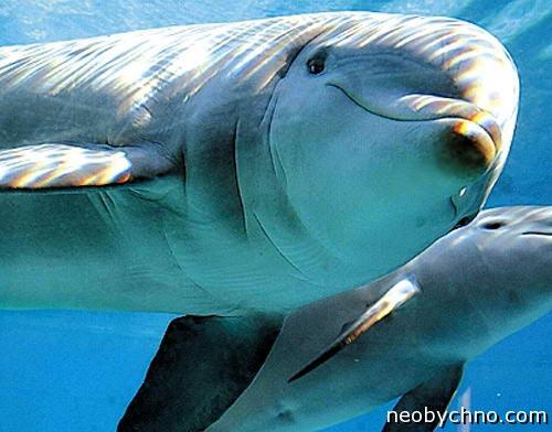 Гей дельфин