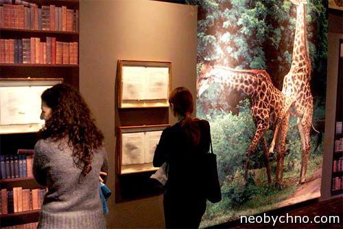 Жирафы, гомосексуальное поведение