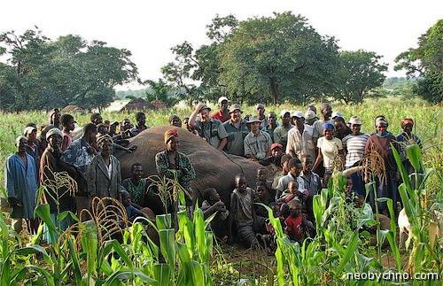 убили слона и радуются