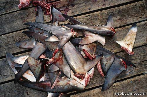 Акульи плавники на суп