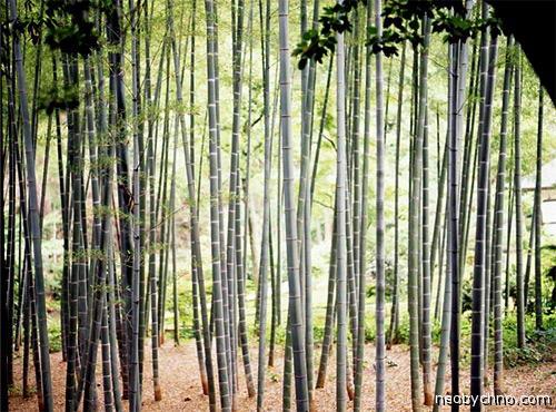 Китайская пытка бамбуком
