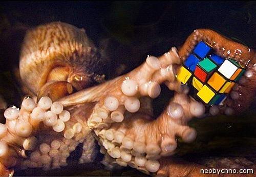 осьминог и кубик рубика