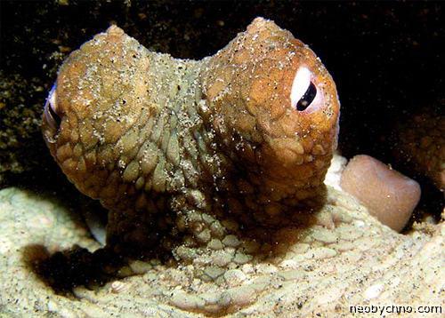 глаза осьминога