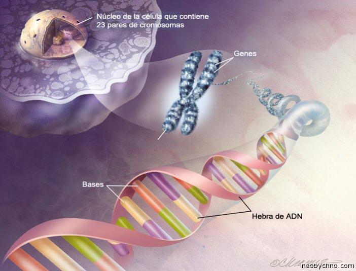 Инженерия Генетическая