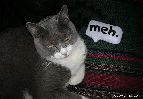 Плюшевый филактер для кота