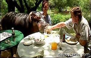 домашний бегемот