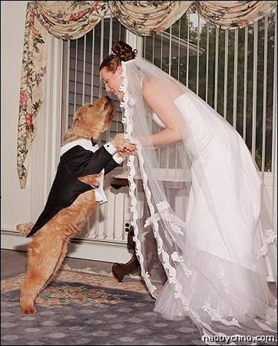 Выйти замуж за кобеля