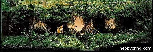 Природный аквариум из Японии