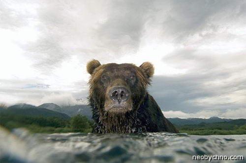 Мокрый медведь