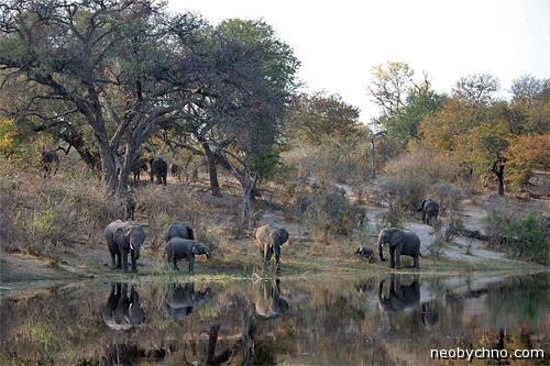 Слоны в Намибии
