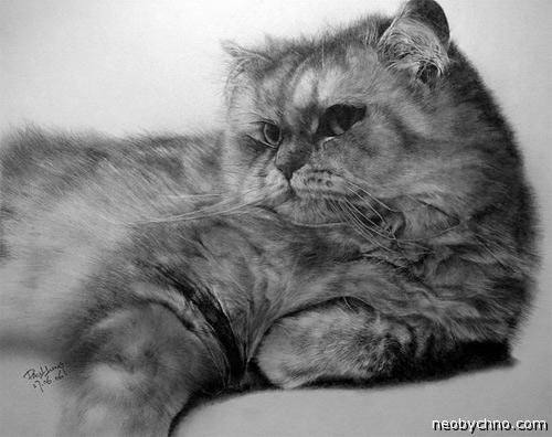 Рисованный котик