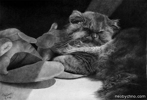 Портрет котенка рисунок карандашом