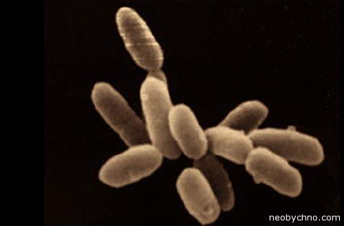 Бактерии живут в асфальте
