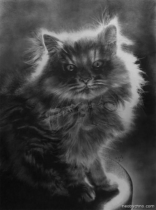 Фотореалистичный рисунок кота