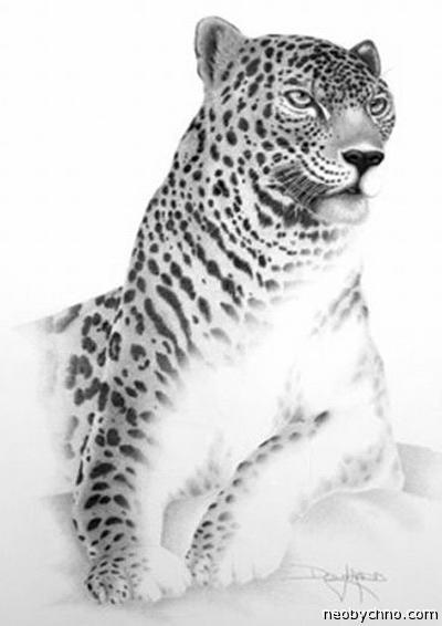Рисунки карандашом, портреты животных