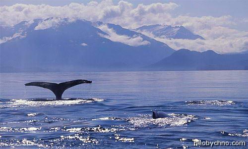 Аляска наблюдение за китами