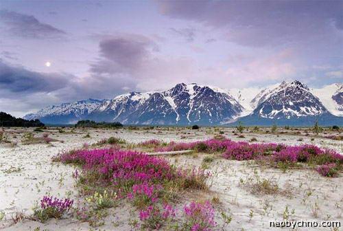 Аляска природа цветы