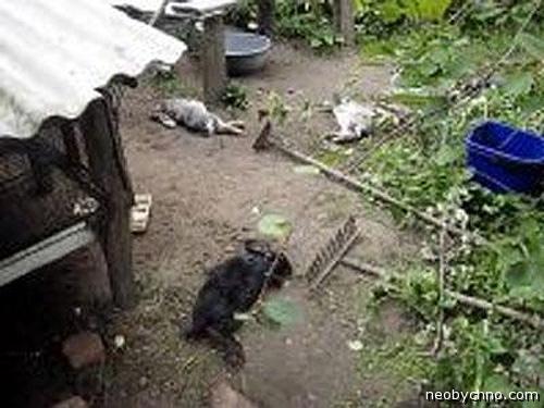 кролики убитые чупакаброй