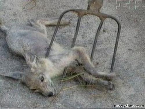 убили чупакабру