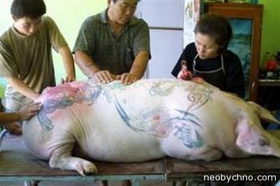 Китайцы татуируют свинью