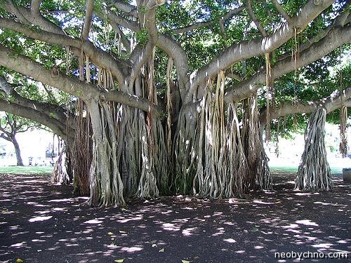 Баньяновое дерево