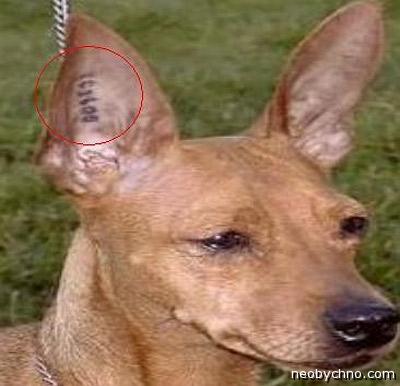 Татуировка на собаке