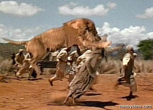Львы нападают на негров