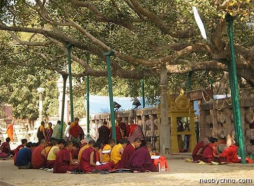 Великое дерево Бодхи