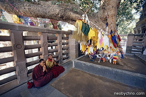Дерево под которым сидел Будда
