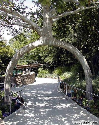 Дерево-арка, очевидное-невероятное