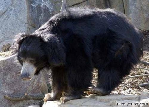 Медведь-людоедь