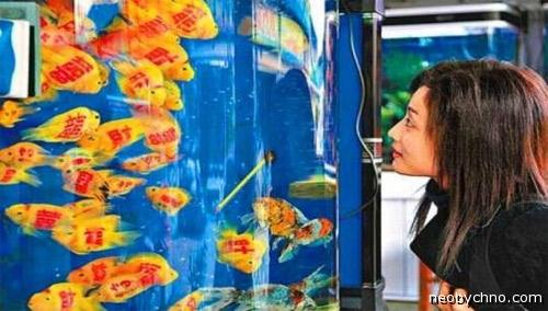 Рыбки с наколками