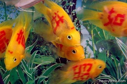Издевательство над рыбами
